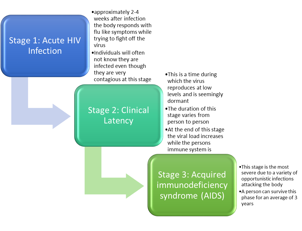 stages of hiv infection 1
